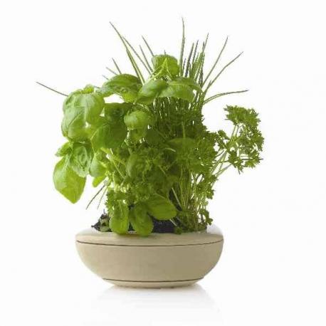 Vypestujte si takéto krásne bylinky