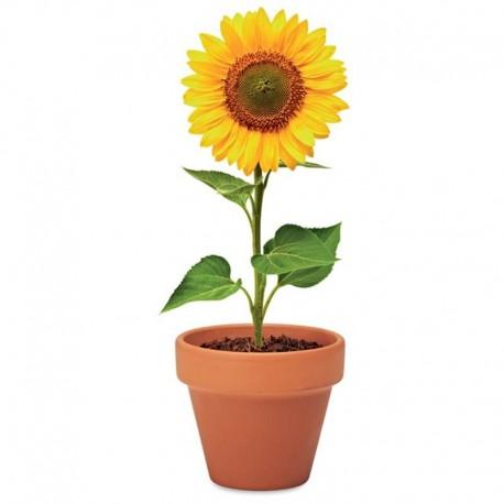 Vypestuj si slnečnicu