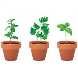 Darček pre pestovateľov - mäta, petržlen, bazalka